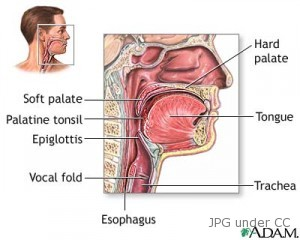 throat-cancer-anatomy-diagram